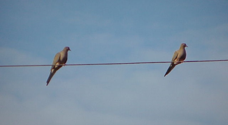 Two_birds_on_a_wire-912329-edited.jpg